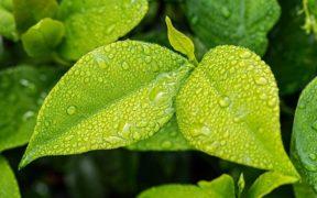 leaf-1001679_640_1