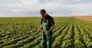 Vivesoy, la única bebida vegetal con cultivo 100% local y certificado AENOR