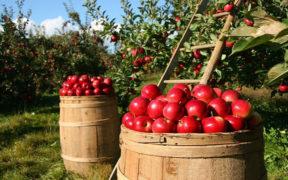 Por un sistema agroalimentario sostenible